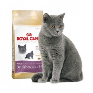 royal canin british shorthair 34 pet shop buvara. Black Bedroom Furniture Sets. Home Design Ideas