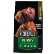 Cibau-puppy mini